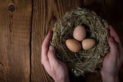 Hands holding a nest full of eggs